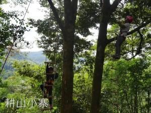 云梯爬树速降
